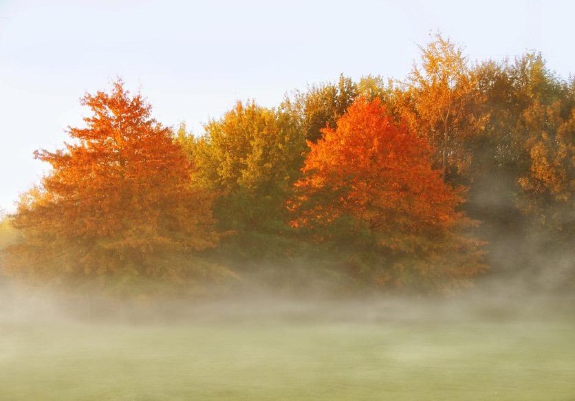 Herbstlich gefärbte Bäume mit Nebelschwaden