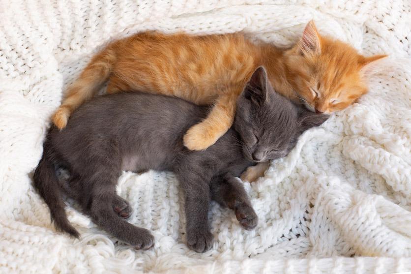 eine schwarze und eine rote Katze schlafen aneinandergekuschelt auf einer weissen Decke