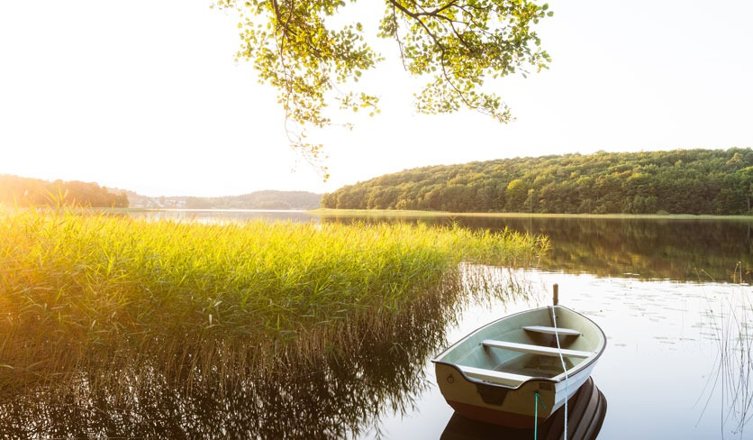 Stimmungsbild: ein Boot liegt neben Schilf an einem idyllischen Flussufer, ein Zweig rankt oben ins Bild. Zeitlupe