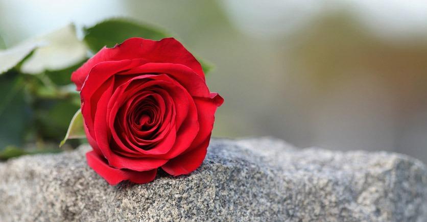 Eine rote Rose liegt auf einem Grabstein