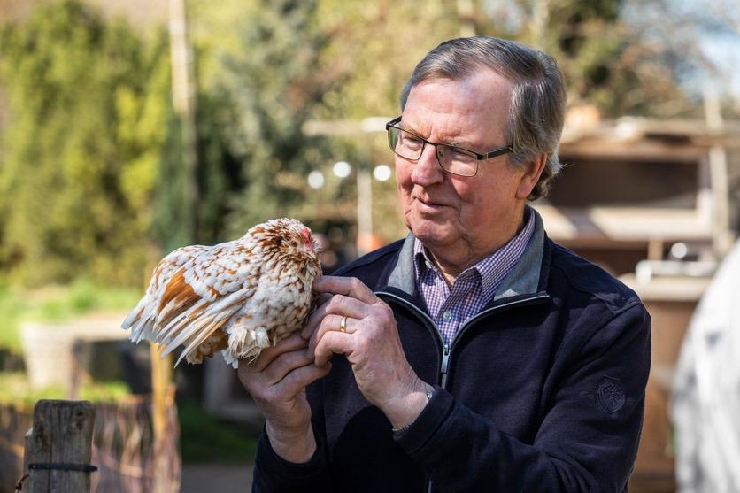 Hühnerzüchter Fritz Brönnimann mit einem Zwerghuhn. Er sieht es liebevoll an. Zeitlupe.